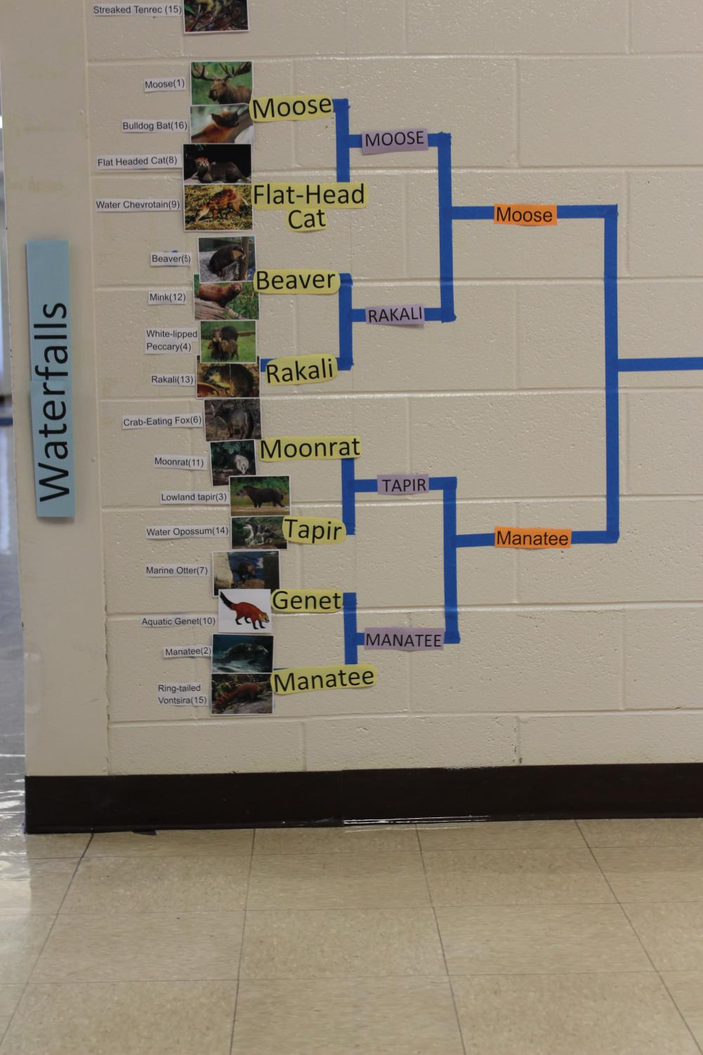 Waterfalls+bracket+after+three+rounds+in+the+tournament.+