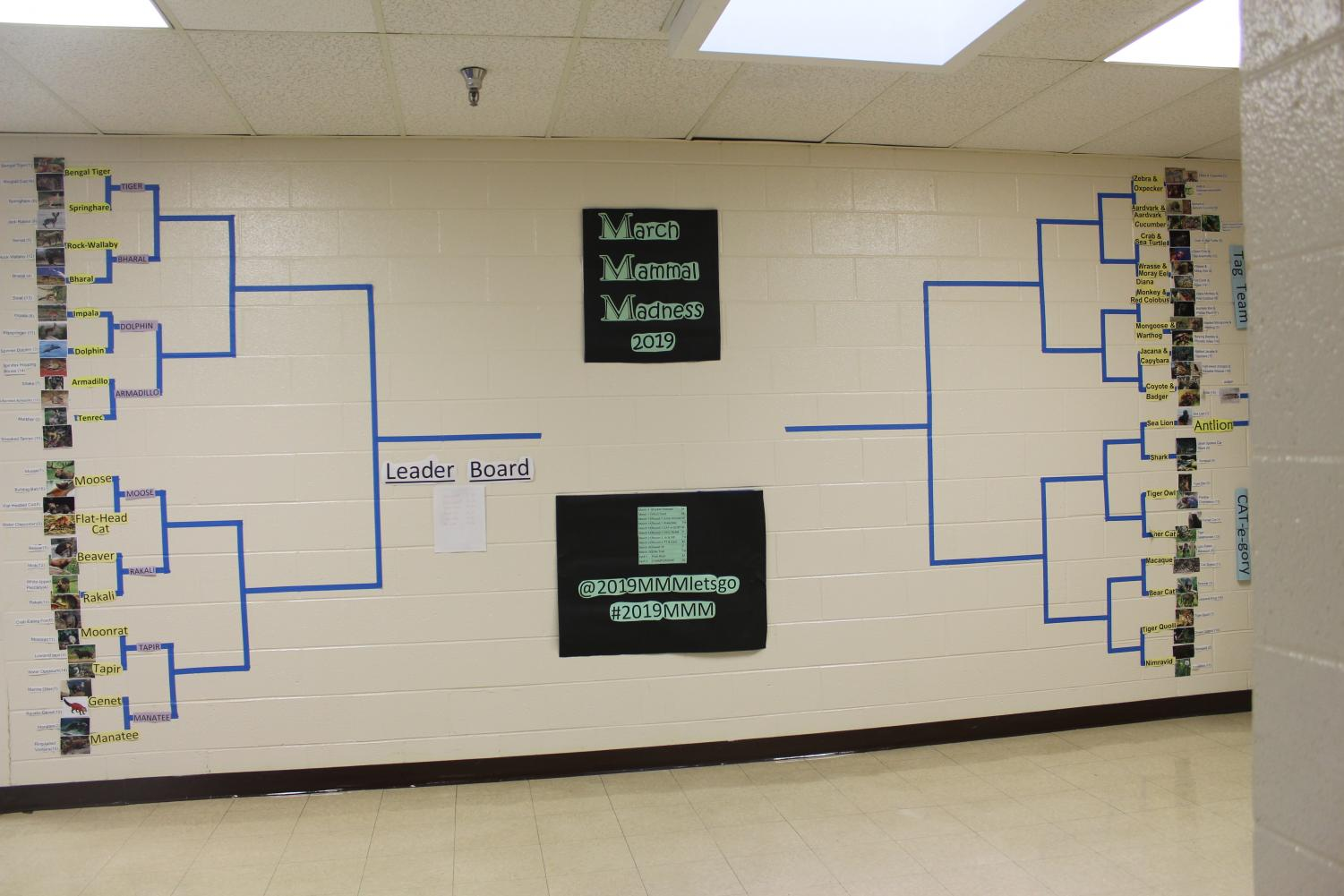 The+beginning+bracket+for+the+whole+tournament.+