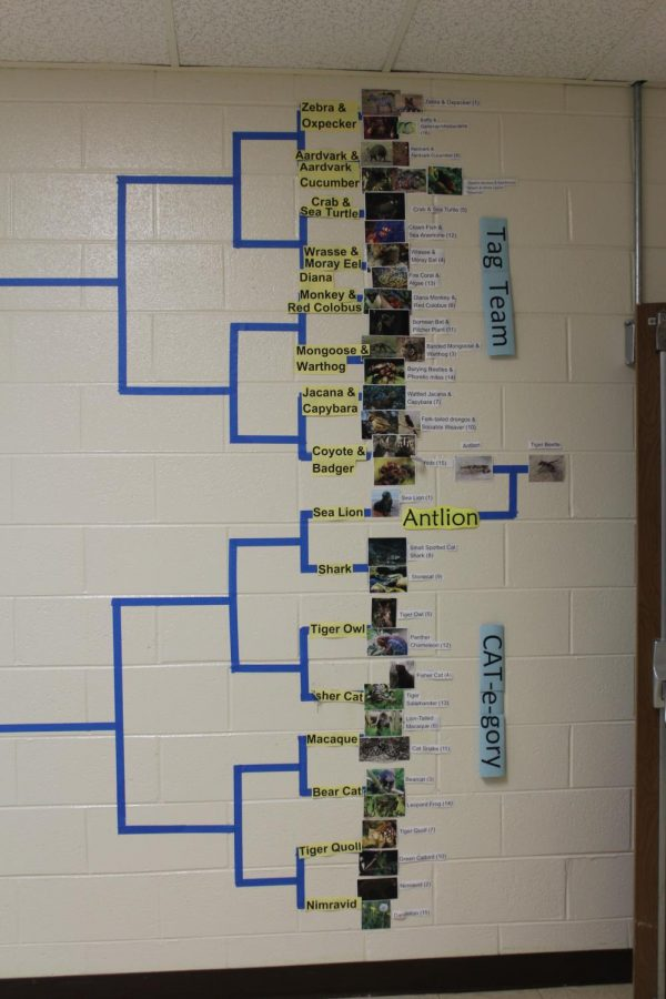 The+Tag+Team+and+Cat-e-Gory+brackets+for+the+tournament.
